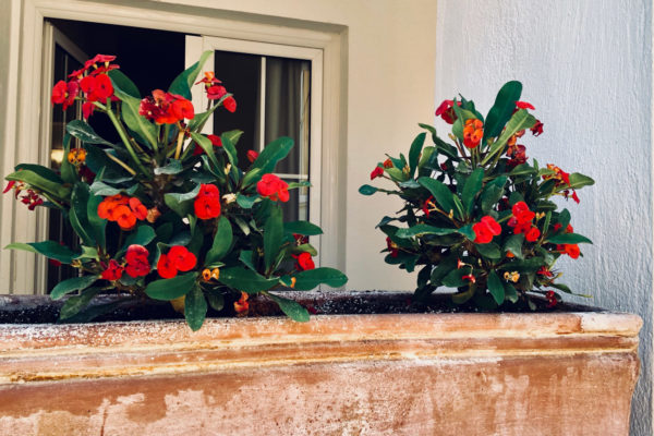 Triple Apartment Flowers - IRIS skiathos